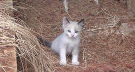 W Białymstoku bezdomnym kotkom się pomaga